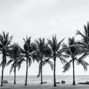 Palm Trees decoupage paper